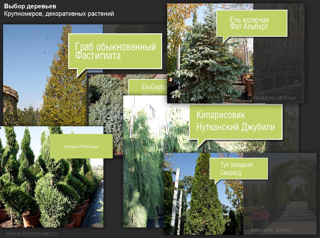 Продажа деревьев в краснодарском крае